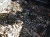 01-compost-en-formation.jpg