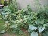 08-legumes.jpg
