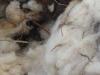 15-laine-de-mouton.jpg