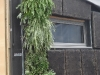03-mur-vegetal