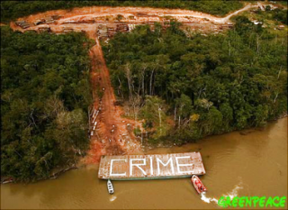 foret-greenpeace.png
