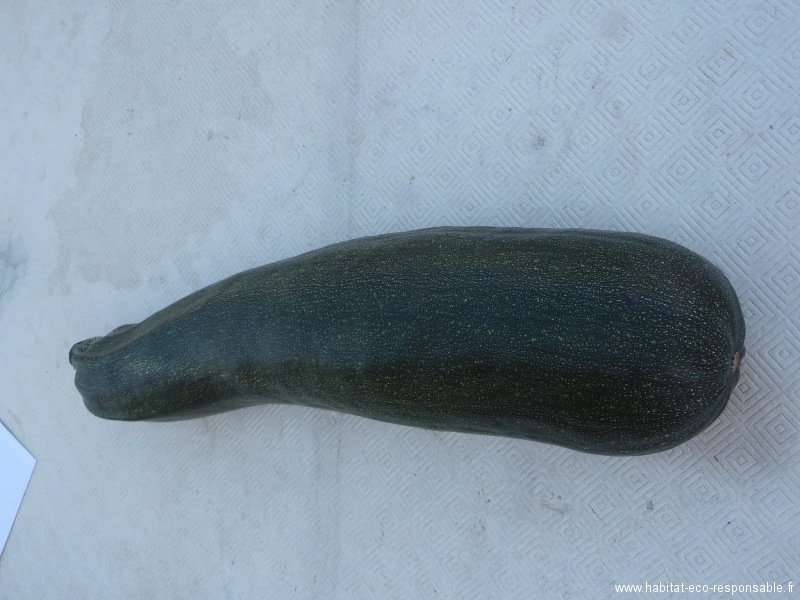 07-courgette.jpg